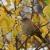 Осень, листья!..
